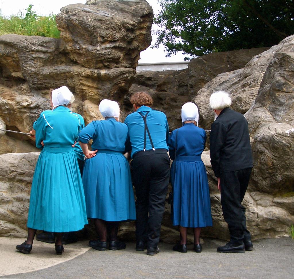 Do Amish Drive Cars