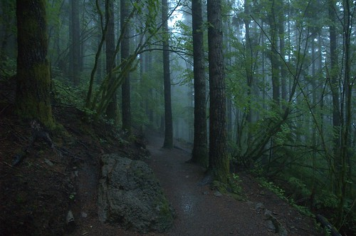 rain forest washington interestingness 500v20f hiking hike trail rattlesnakeledge northbend