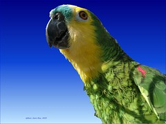 Condo Conflict Resolution: Elusive Parrot