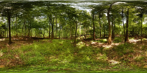 park autostitch panorama tree monument forest geotagged nationalpark pano 360 national sphere swamp cypress hardwood congaree equirectangular 180x360 geo:lon=80816287 geo:lat=33821731
