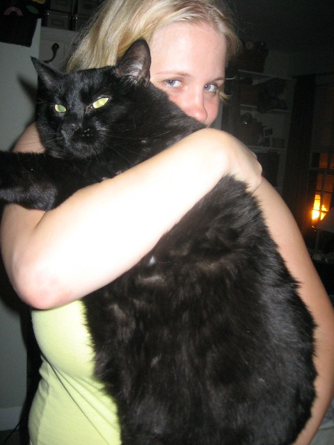 My ginormous cat.