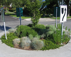 Traffic circle landscaping
