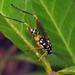 Strange Wasp by Sean McCann (ibycter.com)