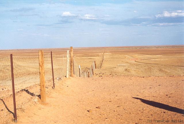 Dingo Fence bis zum Horizont
