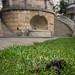 2015_06_19 crottes de chiens Parc Gerlache -