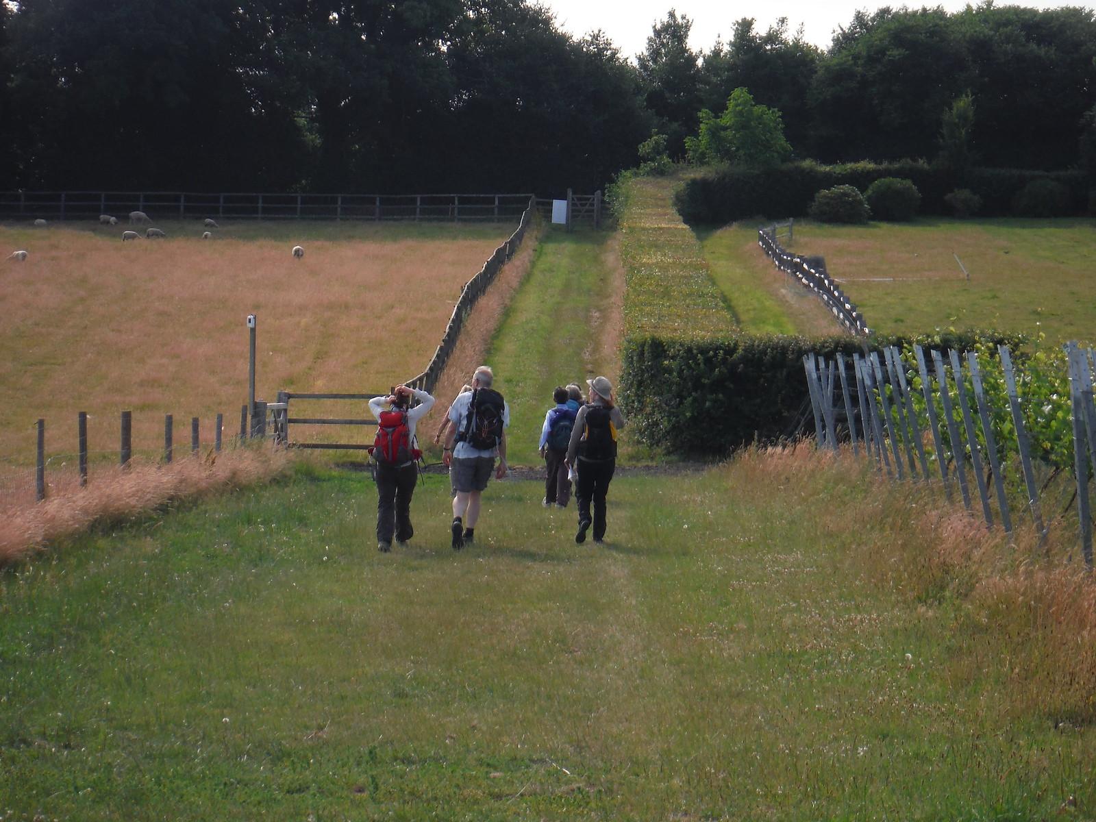 Upperton to River SWC Walk 217 Midhurst Way: Arundel to Midhurst