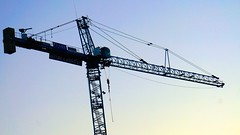 DC Dance of the Cranes 59097
