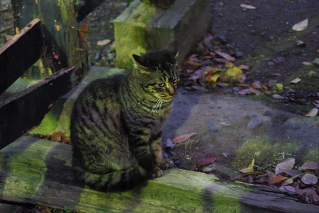 Today's Cat@2016-12-29