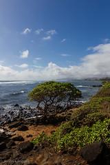 Perfect Kauai views