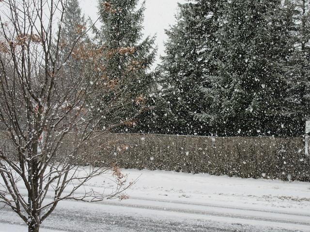 ** Jolis flocons de neige **