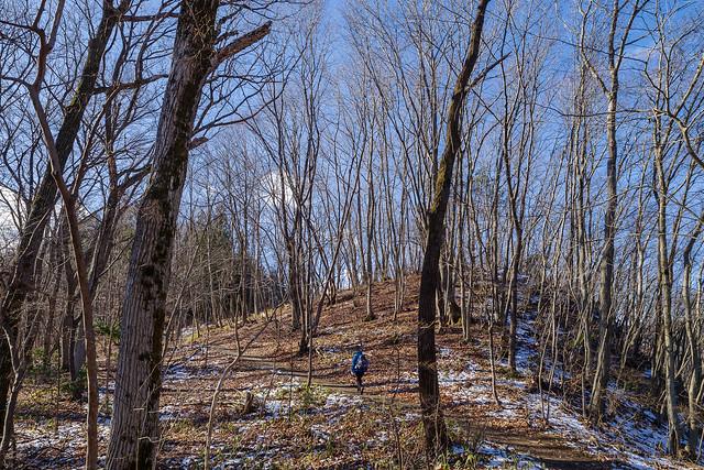 長瀞アルプス・・・冬枯れの雑木林を行く