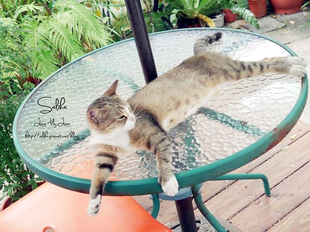 可愛貓咪 (2)