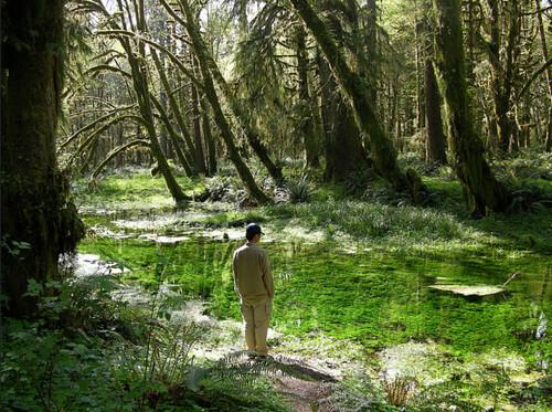 數百年的穩定環境條件下,造就出冷涼的霧林帶裡所看到的厚厚一層附生苔蘚景象。圖片攝影:徐嘉君。