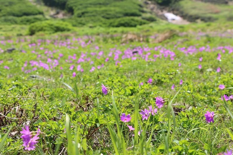 2014-07-20_01147_北海道登山旅行.jpg