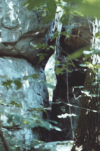 trees nature parks geology horsepens40 stateofalabama alabamalandmarks stclaircountyalabama steelealabama formatfilm35mmnegative alabamacountystclair alabamasteel cameracanonae1program2067283 year1982pictures