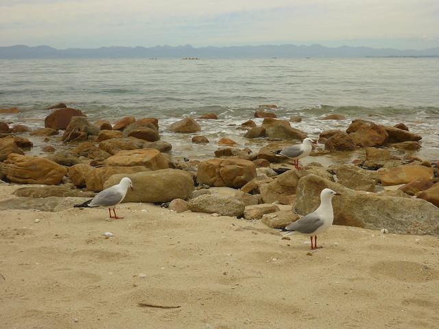 Sea gulls, Abel Tasman, Panasonic DMC-FT5