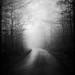 road to trillium by minions & myrmidons