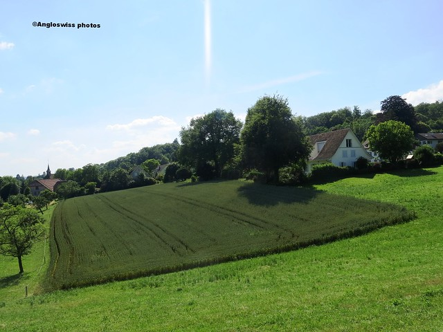Crop  field by castle Waldegg in Feldbrunnen