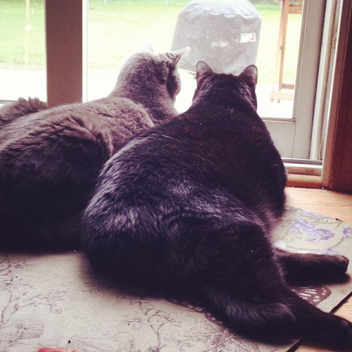 Birds and chipmunks, brother! LOOK AT THEM ALL!!! #Lester #Julio #CatsOfInstagram