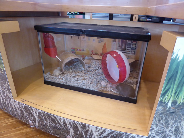 Gerbils in the service desk, children's room, Main Library, Cambridge Public Library, MA