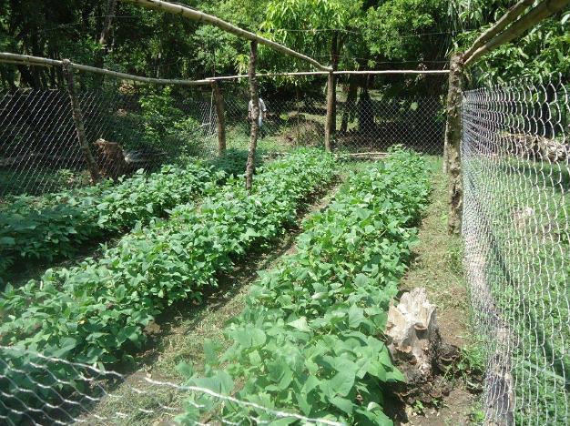 Capacitan a productores en manejo de plagas en jitomate