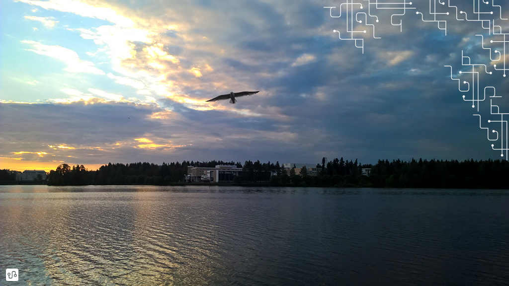 Andorinha voando sobre o rio Kajaani