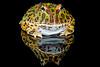 Pacman Frog, CaptiveLight, Bournemouth, UK by rmk2112rmk