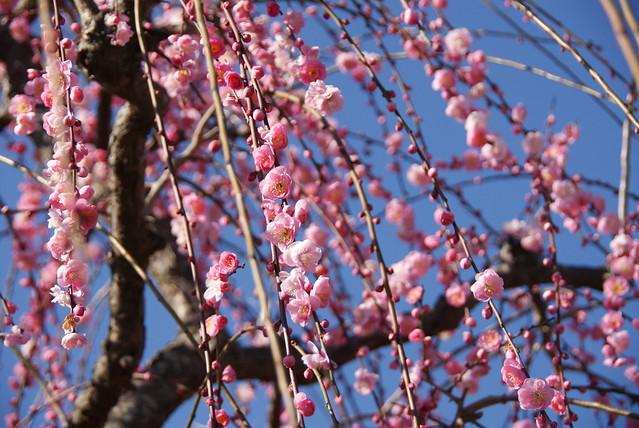 日本的立春 - naniyuutorimannen - 您说什么!