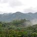 Cloud Forest por districtinroads