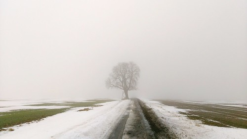Der Kastanienbaum an der Thomas Knack Gedächtnisstraße Tree Nature Fog Tranquility Single Tree Water Outdoors Tree Trunk Winter Cold Temperature No People Sky Landscape Beauty In Nature Day Lone at Kastanienbaum
