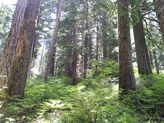 Larch Mountain Crater Hike