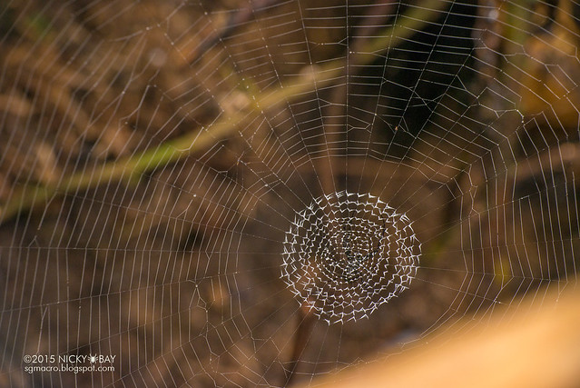 Unknown spider web - DSC_4145