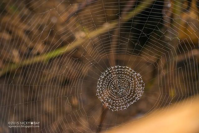Unknown spider web - DSC_4145