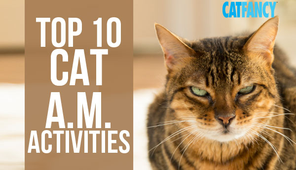 top-10-cat-morning-activities