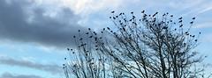 Crows on Patrol