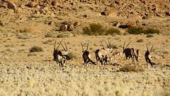 DSC08153 - NAMIBIA 2013