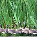 Marsh march! by Jeannette Greaves