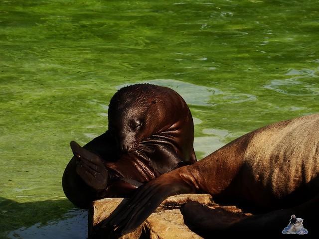 Zoo Berlin 05.08.2015 056