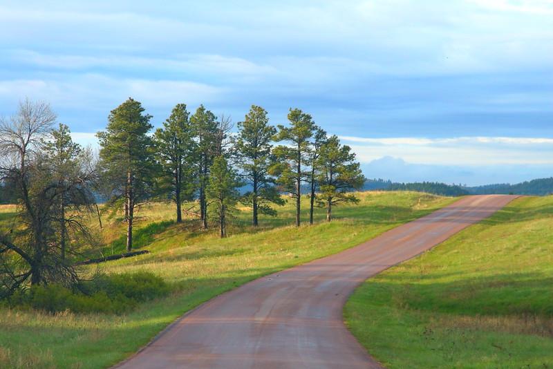 IMG_8567 Wildlife Loop Road, Custer State Park