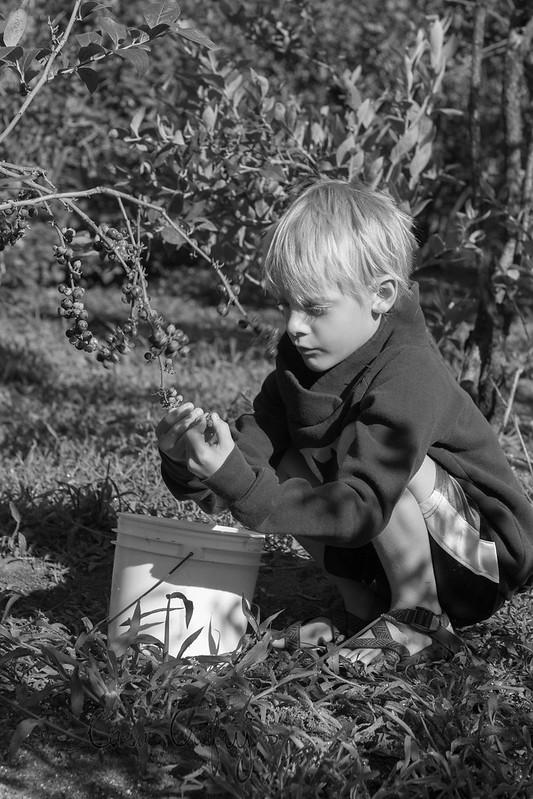 baby berry picking