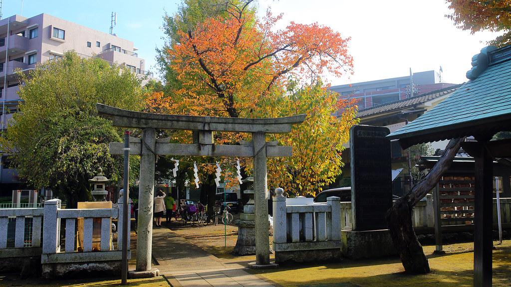 光が丘 Tokyo, Japan / Sigma 35mm / Canon 6D 剛道光丘的時候亂繞,繞道一間神社,神社內的景色也很美!  一整個就是秋天的顏色!  Canon 6D Sigma 35mm F1.4 DG HSM Art IMG_9088_16x9 2016/11/20 Photo by Toomore