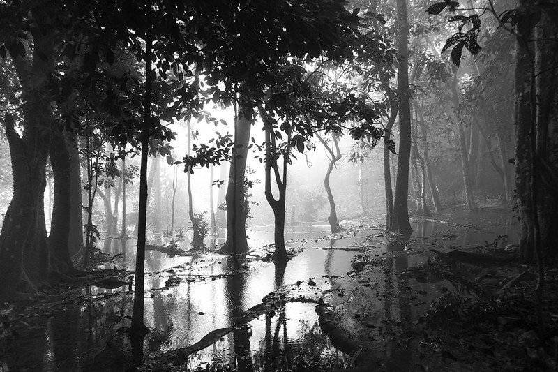 Foggy & flooded forest on top of Kuang Si Waterfall, Luang Prabang, Laos