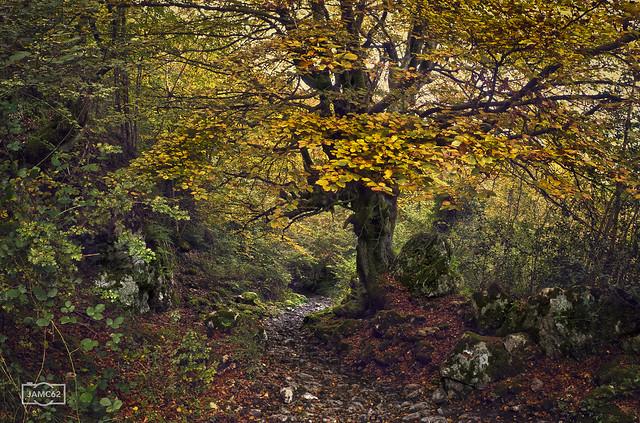 Por la Senda del Arcediano/ On the Arcediano path, Picos de Europa National Park, Spain
