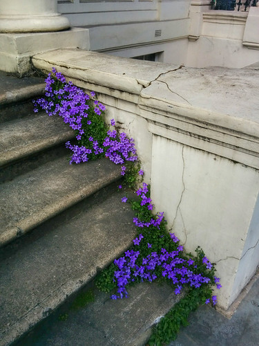 flowery stairs in Notting Hill