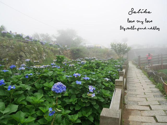 陽明山竹子湖景點 (6)