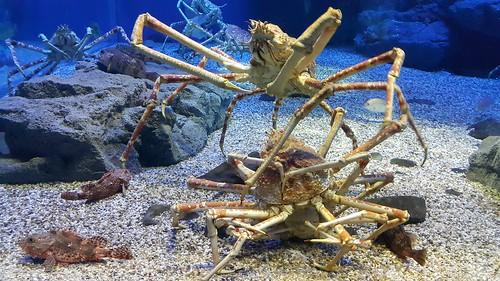 เหล่าสัตว์น้ำในพิพิธภัณฑ์สัตว์น้ำไคยูคัง