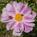 Seoul Iris Garden-541