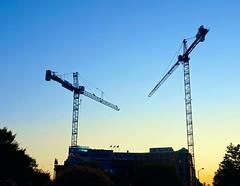 DC Dance of the Cranes 59092