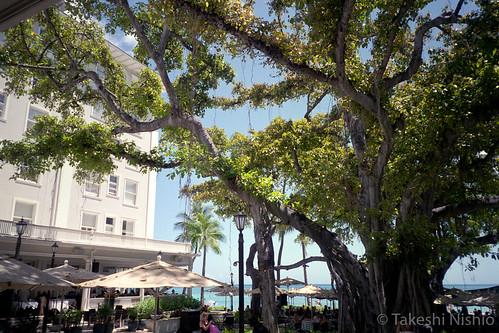 under the Moana Surfrider's banyan tree