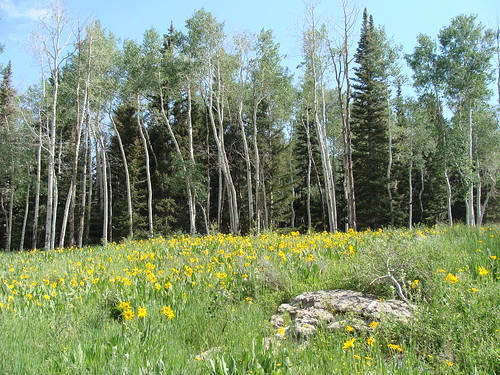 colorado meadow hike wildflowers aspen mesacounty uncompahgreplateau
